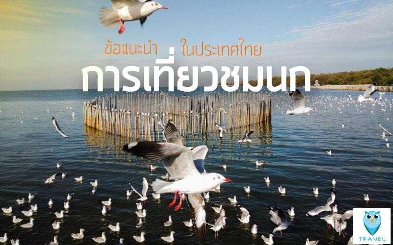 ข้อแนะนำ-การเที่ยวชมนก-ในประเทศไทย