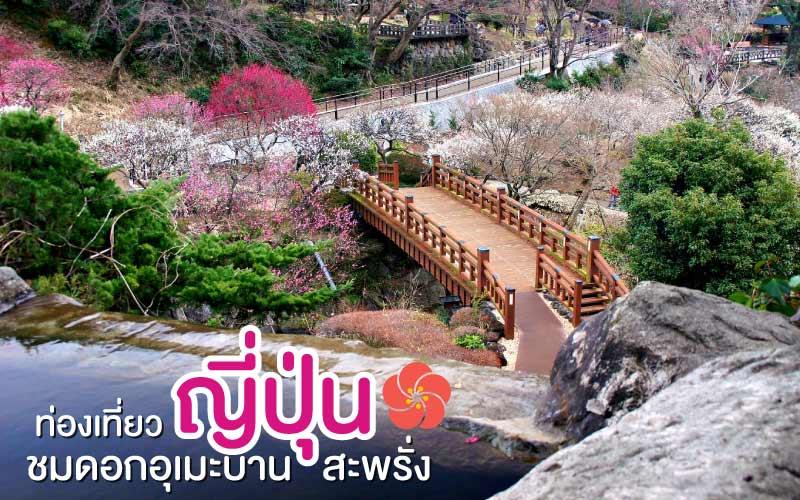 ท่องเที่ยวญี่ปุ่น ชมดอกอุเมะบานสะพรั่ง