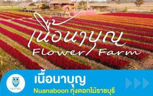 ท่องเที่ยว : เนื้อนาบุญ Nuanaboon ทุ่งดอกไม้ราชบุรี